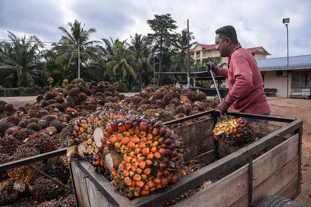 AS Sekat Import Minyak Sawit Syarikat Kedua Malaysia Berhubung Dakwaan Buruh Paksa