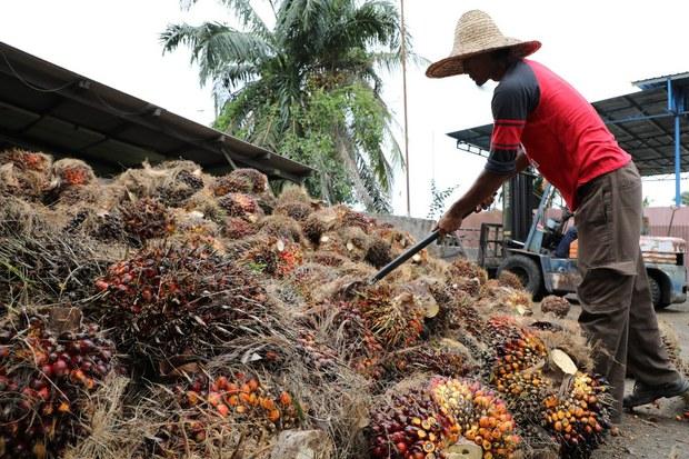 Malaysia Tidak Setuju Tindakan Drastik AS Sekat Minyak Sawit Sime Darby